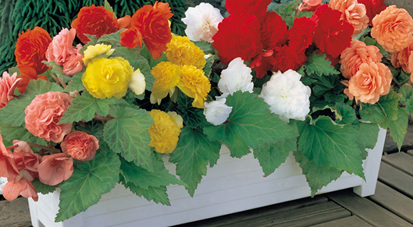 jardim flores que gostam de sol:Flores e cores para alegrar a casa